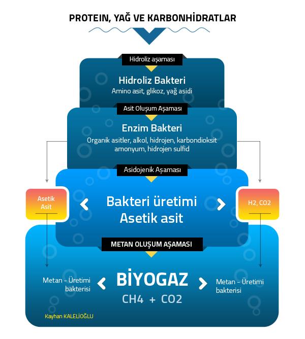 biyogaz_oluşumu